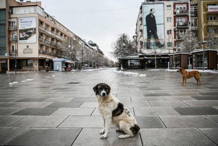 Собаки в пустом городе