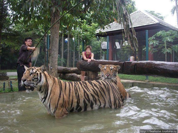 Сохранение тигров