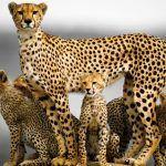 Плодовитая мама