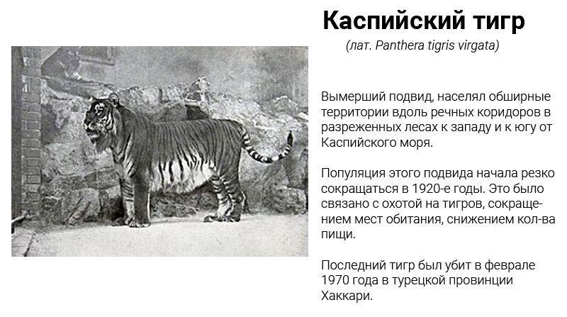 Каспийский подвид