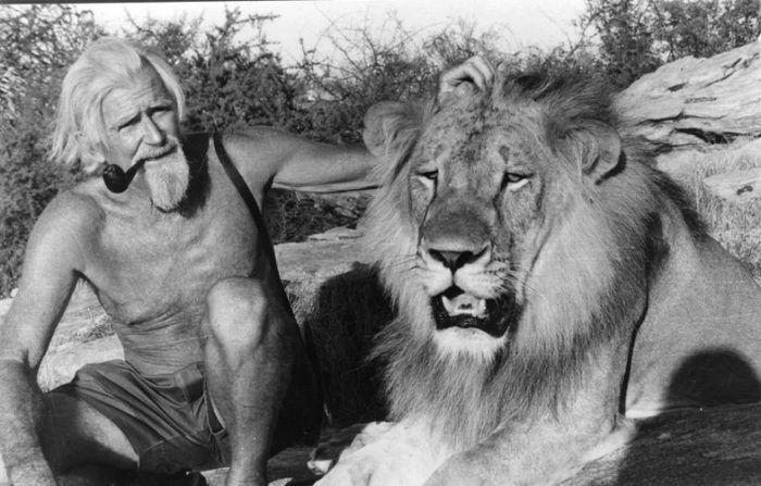 Лев с зоозащитником