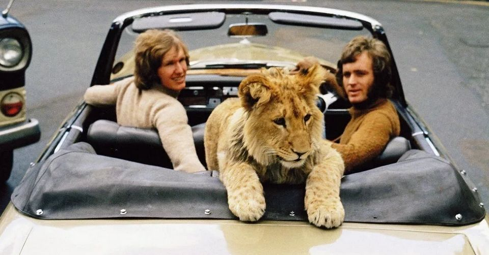 В машине со львенком