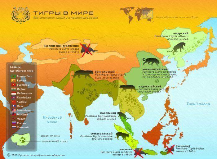 Распространение тигра