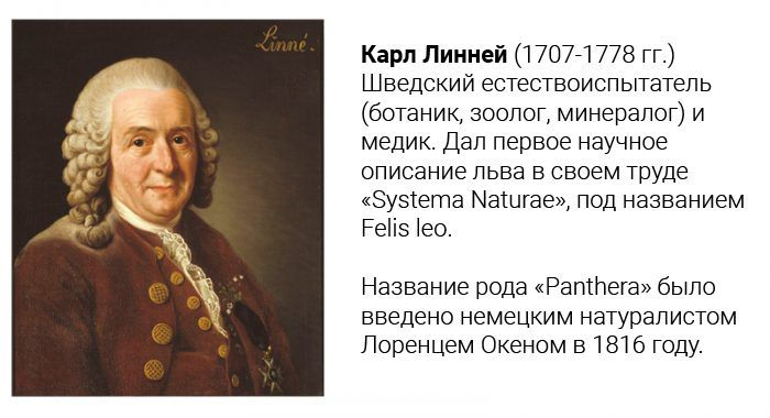 «Systema Naturae» Линнея