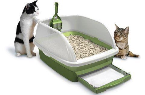 Лоток и две кошки