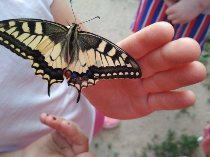 Бабочка на детской руке