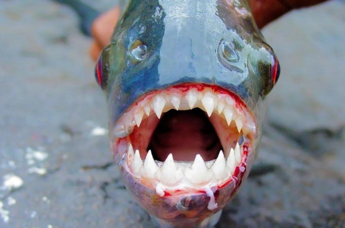 Жуткая рыбешка