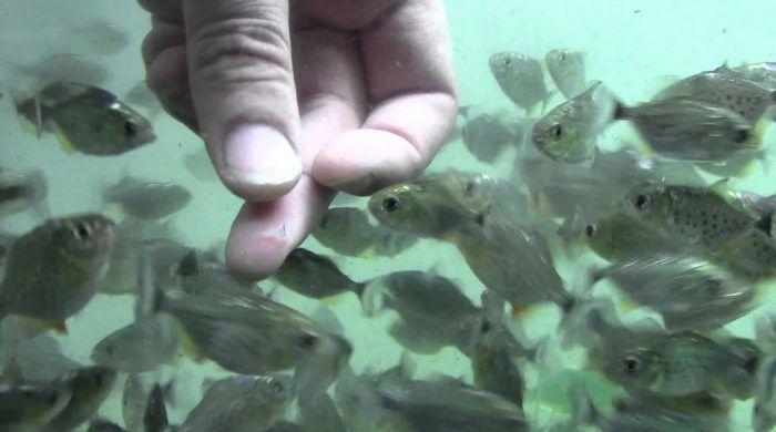 Много рыбок