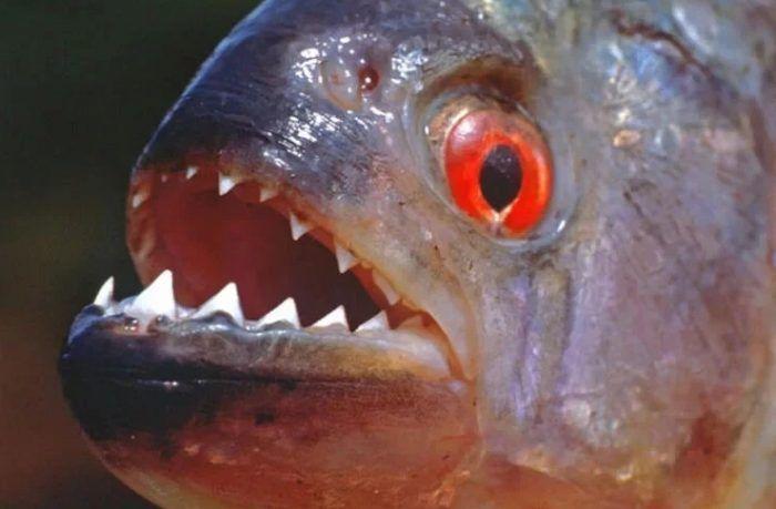 Зубки и красный глаз