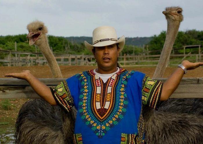 Два страуса и человек