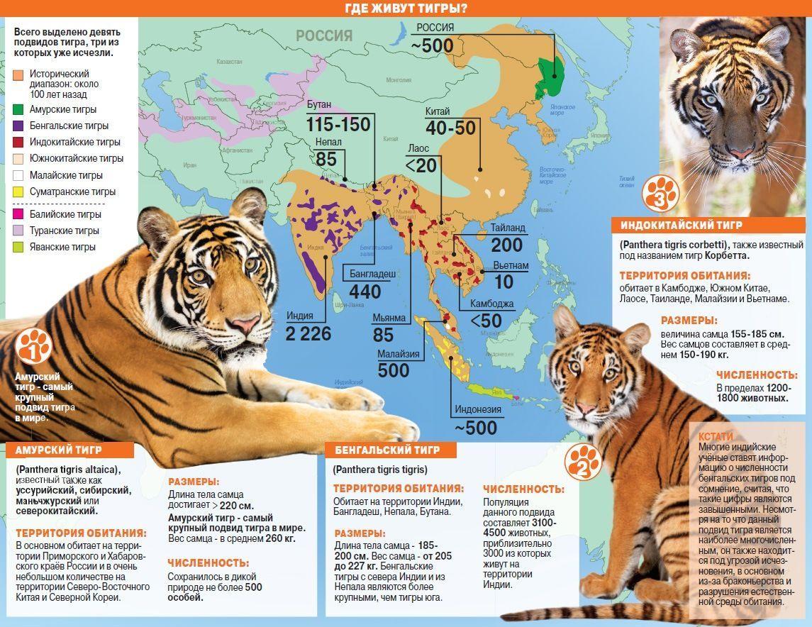 Места обитания тигра