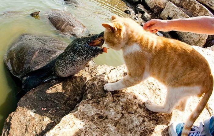 Атакует котика