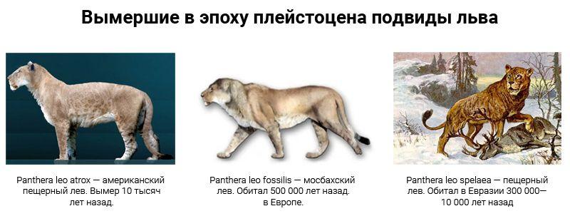 Вымершие в плейстоцене