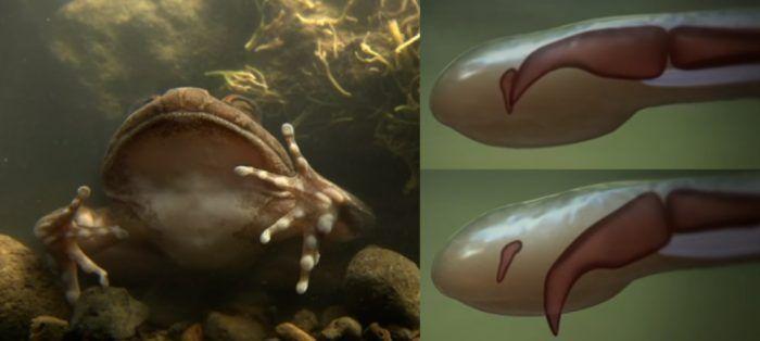Лягушка ломает пальцы