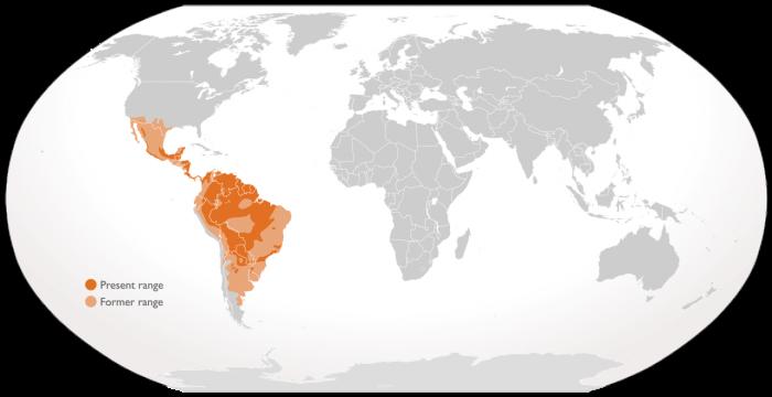 Ареал ягуара