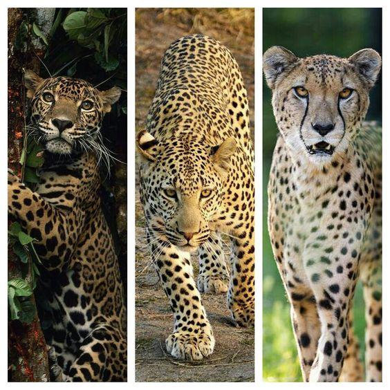 Три зверя