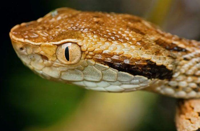 Желтый глаз и ямка на голове