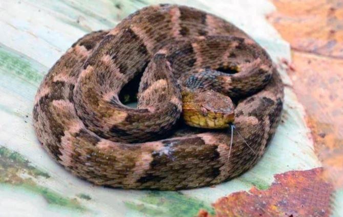 Длинная змея