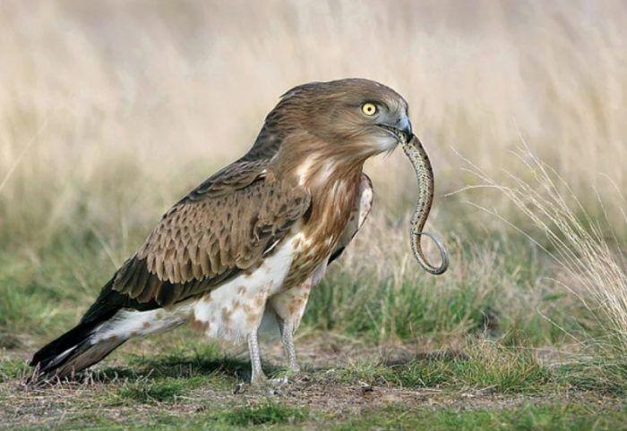 Поедание змейке