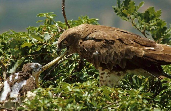 Птичка кормит