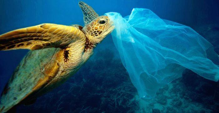 Черепаха и пластиковый пакет
