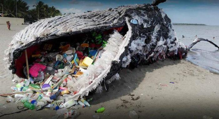 В ките куча пластика