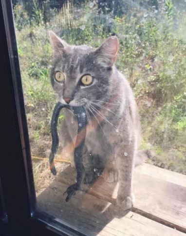 Приученный кот