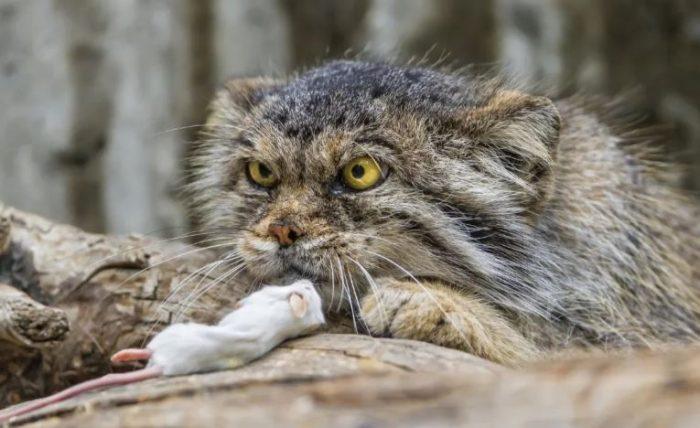 Мышка на завтрак