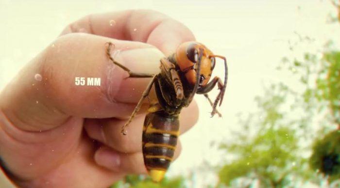 Крупное насекомое