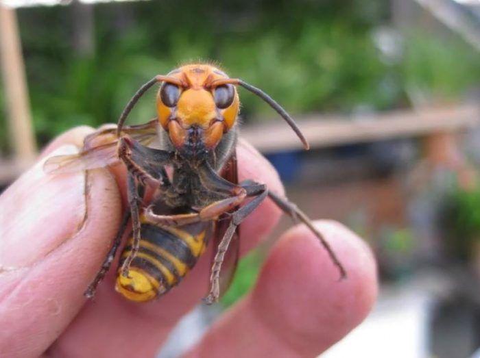 Наглые насекомые