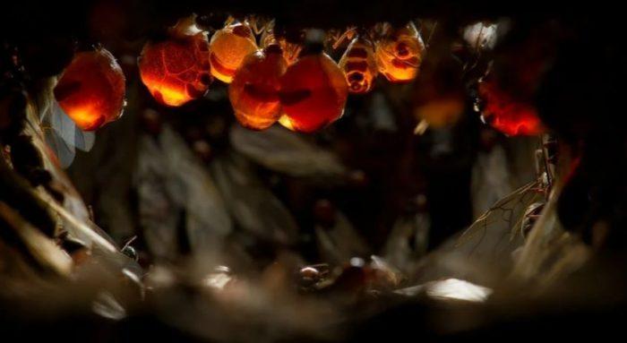 Висящие муравьи