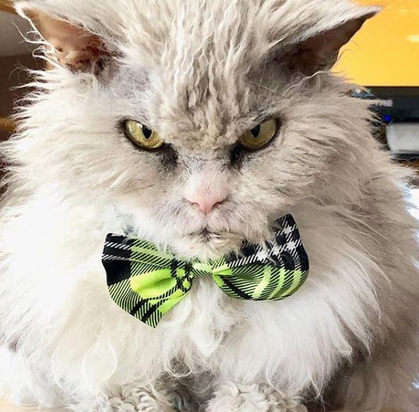 Я джентльмен