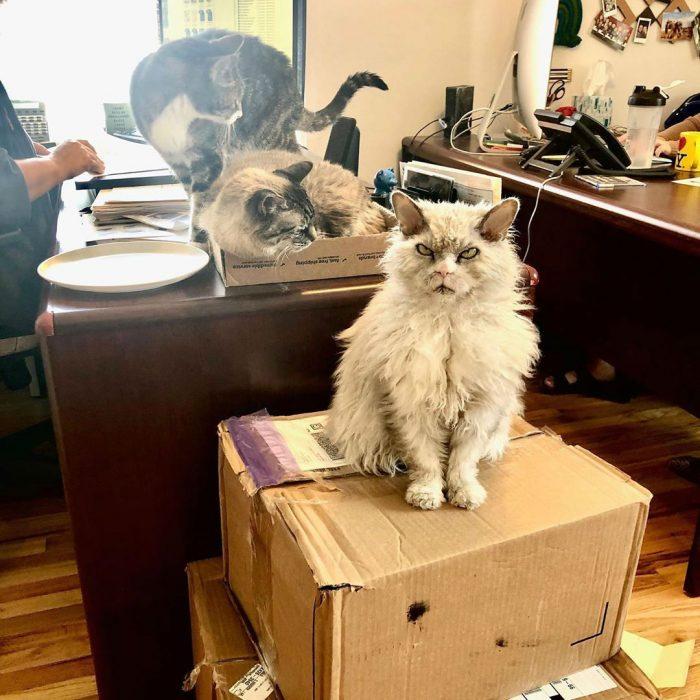 Коробка и Альберт