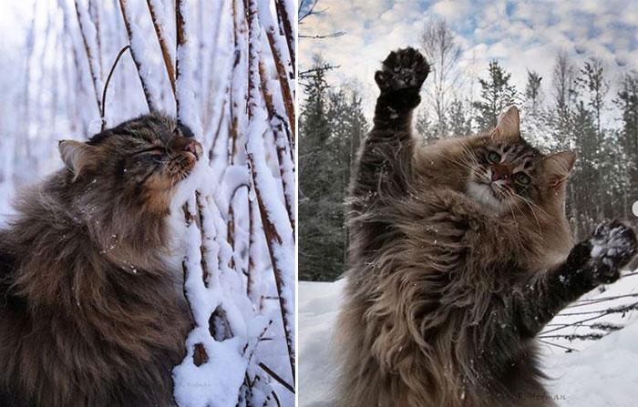 Обожающие зиму