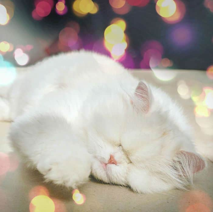 Спящая Моэм