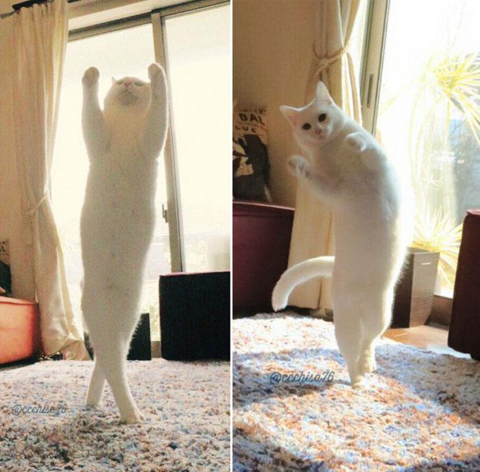 Кошка-балерина