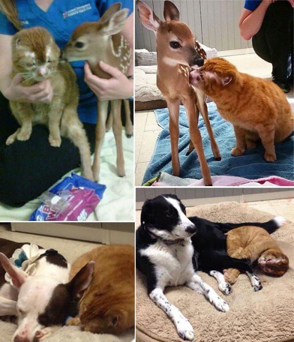 Рассел и животные