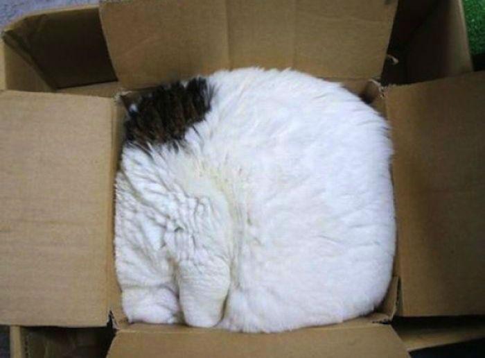 Коробка для сна