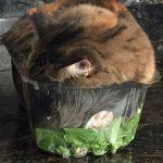 Так и уснул в салате