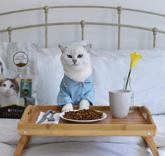Сервированный завтрак
