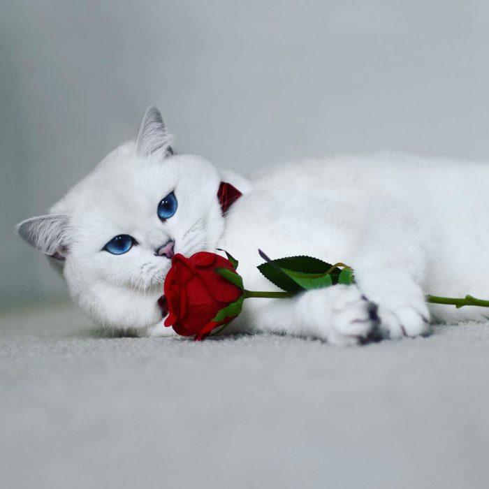 С розой
