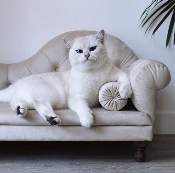 На диване удобнее
