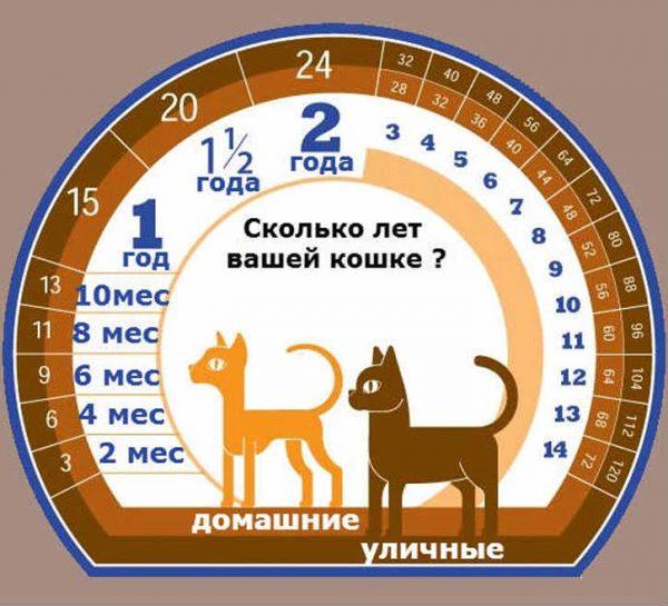 Уличные и домашние кошки