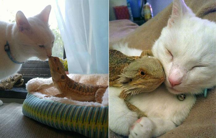 Дракончик и котик