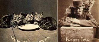 Гарри и его котики