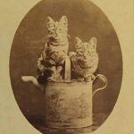 Котики на расписной лейке