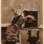 Кот-фотограф