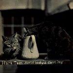 Котик с кувшином