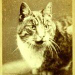 Котик нна старом фото