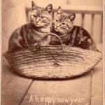 Котики в корзине